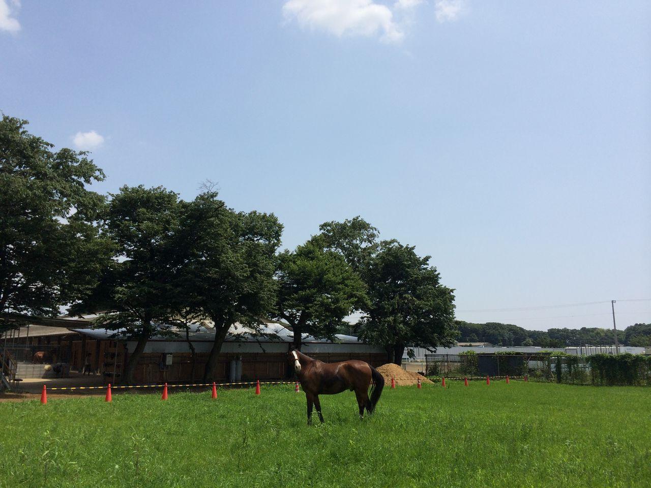 千葉県乗馬クラブ 尾形ドレッサージュステーブル